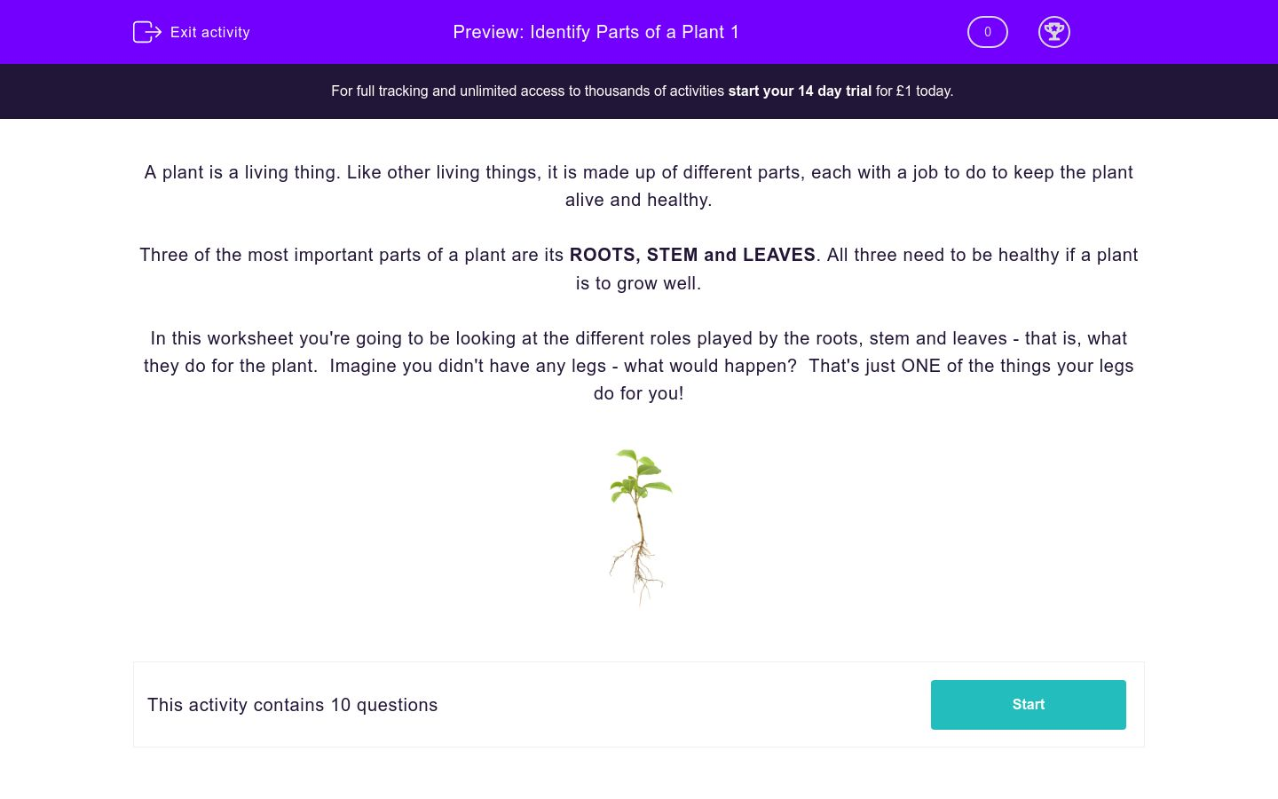 'Identify Parts of a Plant 1' worksheet