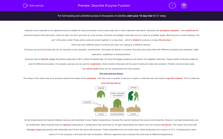 'Describe Enzyme Function' worksheet