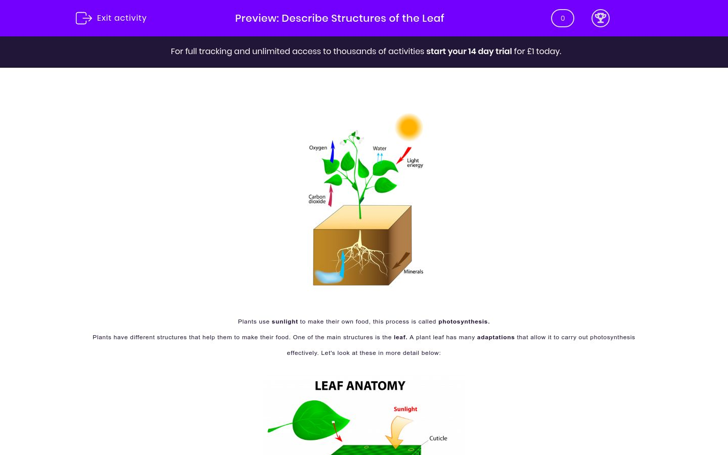 'Describe the Structures and Functions of the Leaf' worksheet