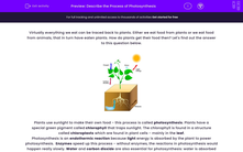 'Describe the Process of Photosynthesis' worksheet