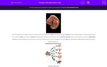 'Describe Stem Cells' worksheet
