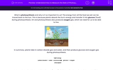 ' Understand How to Measure the Rate of Photosynthesis' worksheet