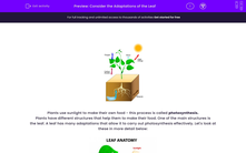 'Consider the Adaptations of the Leaf' worksheet