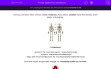 'Skeleton and Circulation 1' worksheet