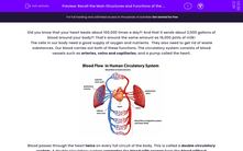 'Recall the Main Structures and Functions of the Circulatory System' worksheet
